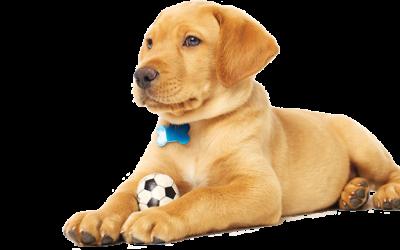 Online Kedi ve Köpek Maması Çeşitleri